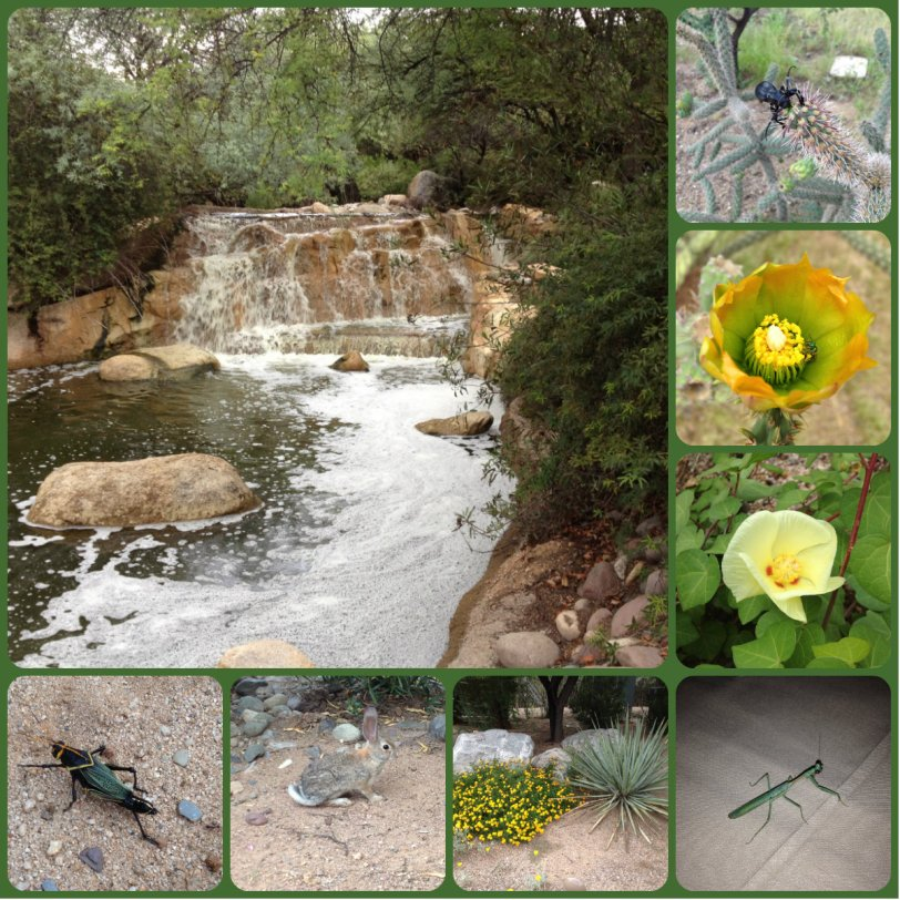 desert flowers, insects, water features, Miraval spa