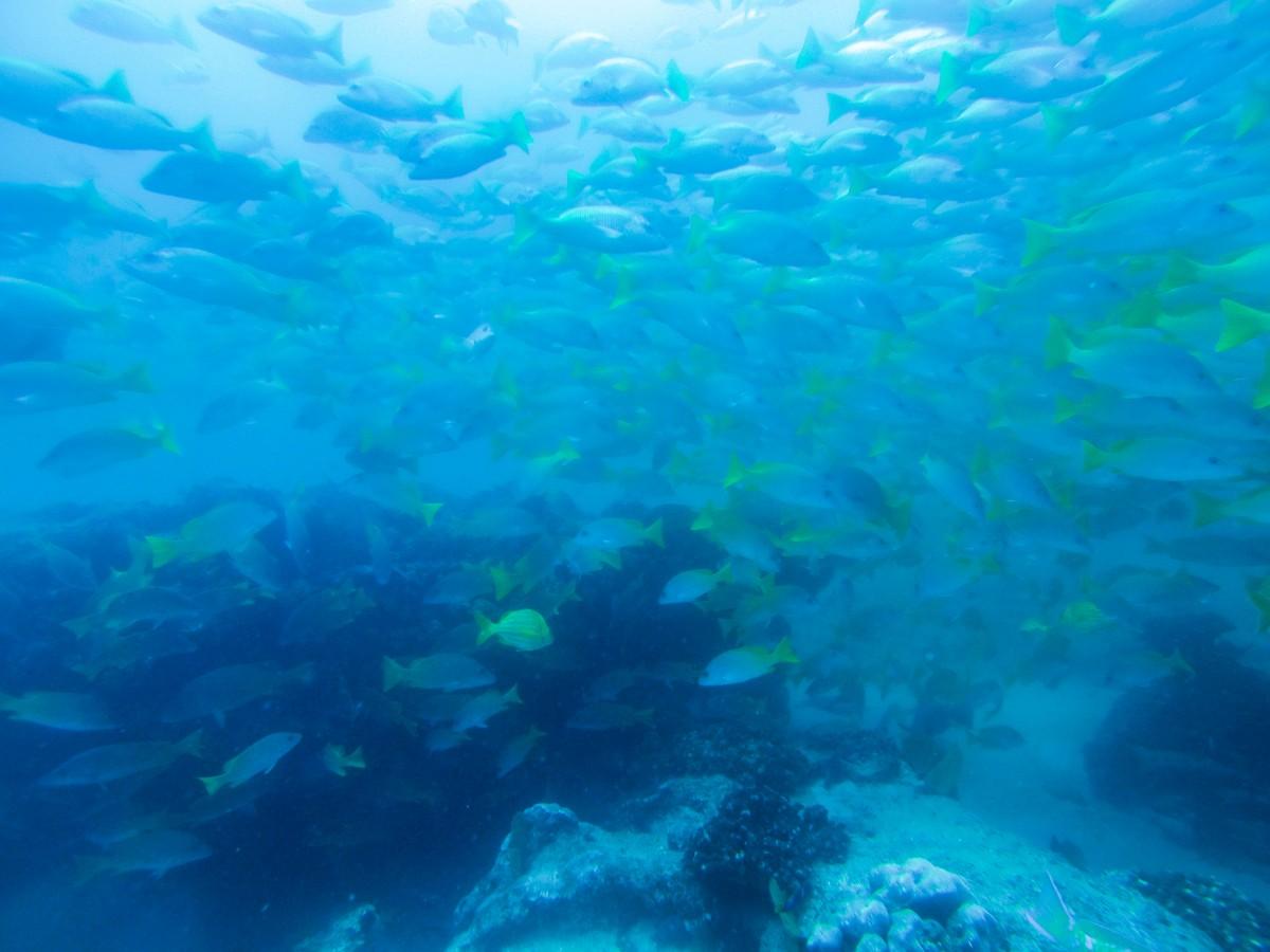 Cabo Pulmo: Scuba at a Marine Preserve