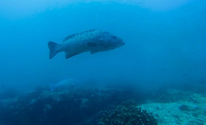 Cabo Pulmo Fish, damommacheftravels.com